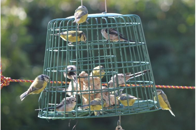 Pest Proof Bird Feeding