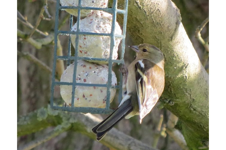 Finding the Right Bird Feeder For You