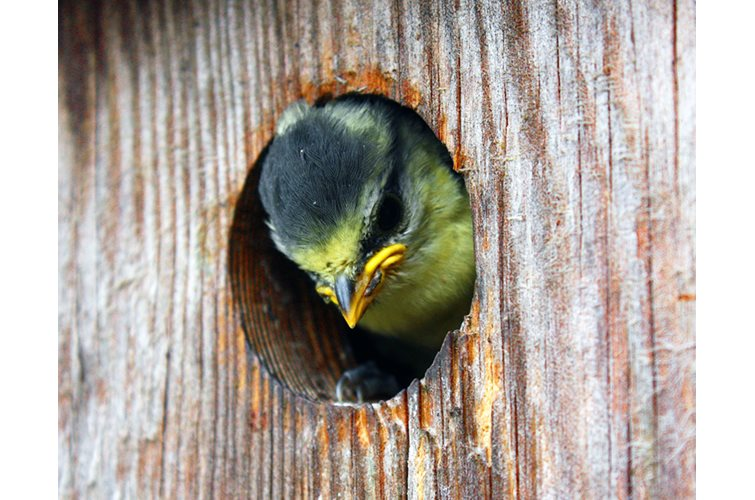 National Nest Box Week 2019!