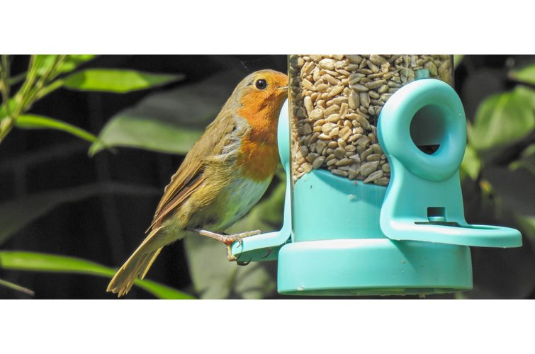 Flo Seed Feeder - Review