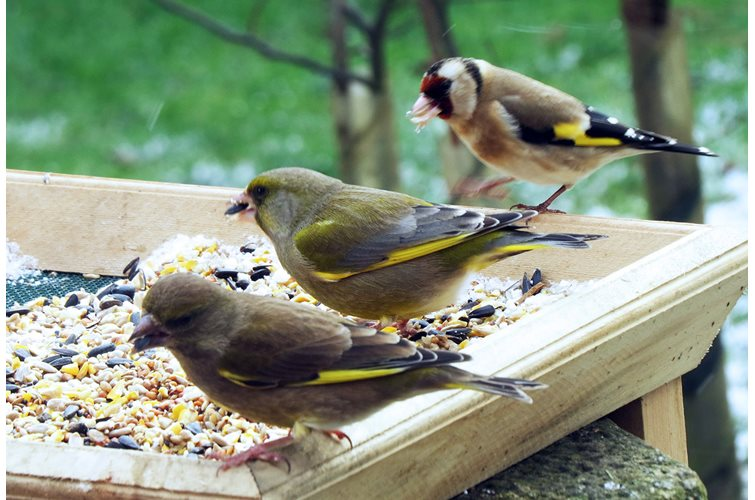 5 Tips For Creating a Bird Feeding Paradise
