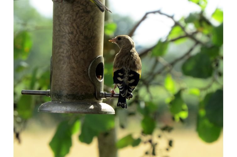 Why Buying/Making Quality Bird Food Matters