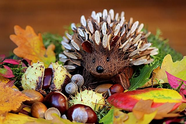 What do you feed Hedgehogs?