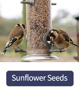 Sunflower Seeds For Birds