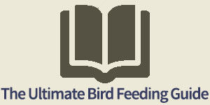 The Ultimate Bird Feeding Guide
