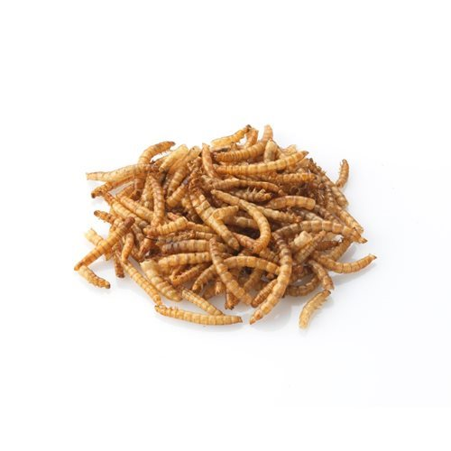 Brinvale Dried Mealworms