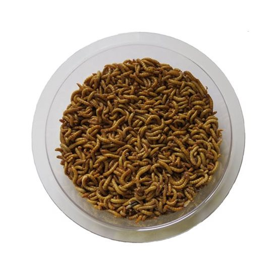 Image for Live Mealworms for Birds