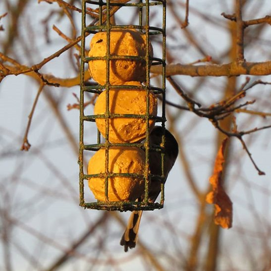 additional image for Sunflower Heart Suet Balls