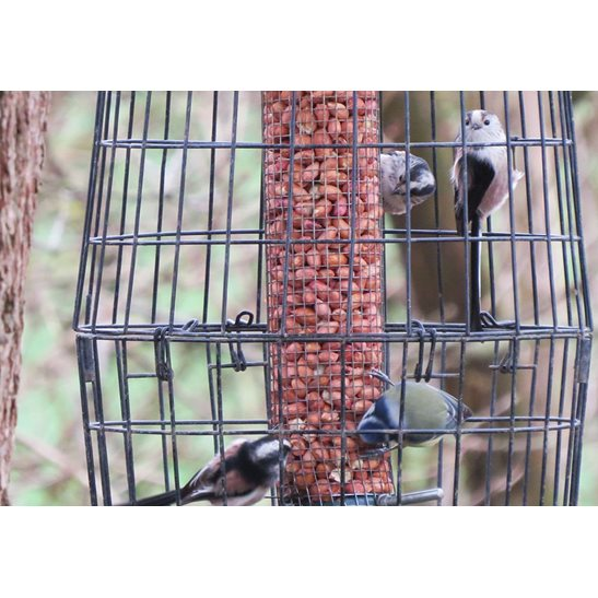 additional image for Peanuts for Birds (Jumbo's)