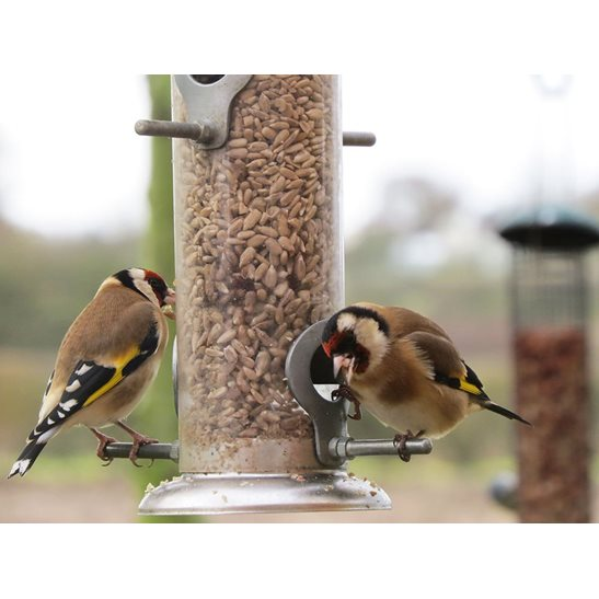 additional image for Sunflower Hearts for Birds